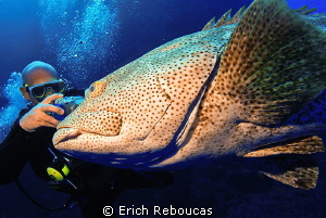 Giant grouper and photographer by Erich Reboucas 